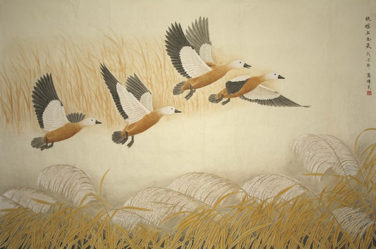 壁纸 动物 鸟 摄影 桌面